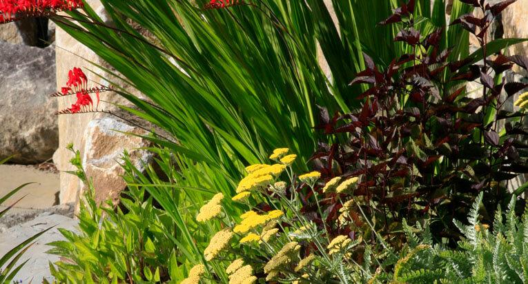 plantings5