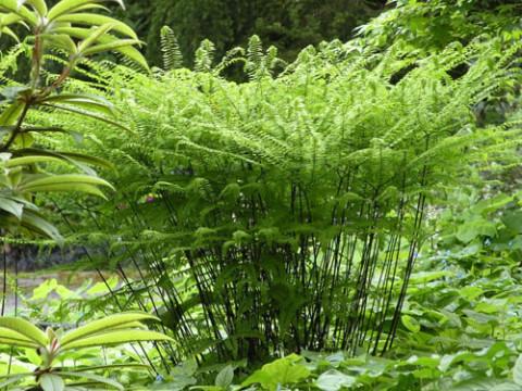 Fern And Hosta Landscaping