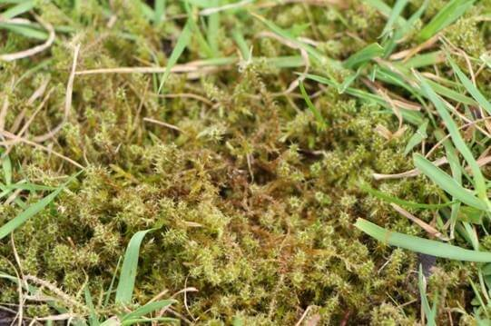 Dealing with moss problems in lawns