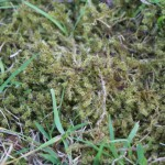 In Harmony Sustainable landscapes, Lawn Care, Moss
