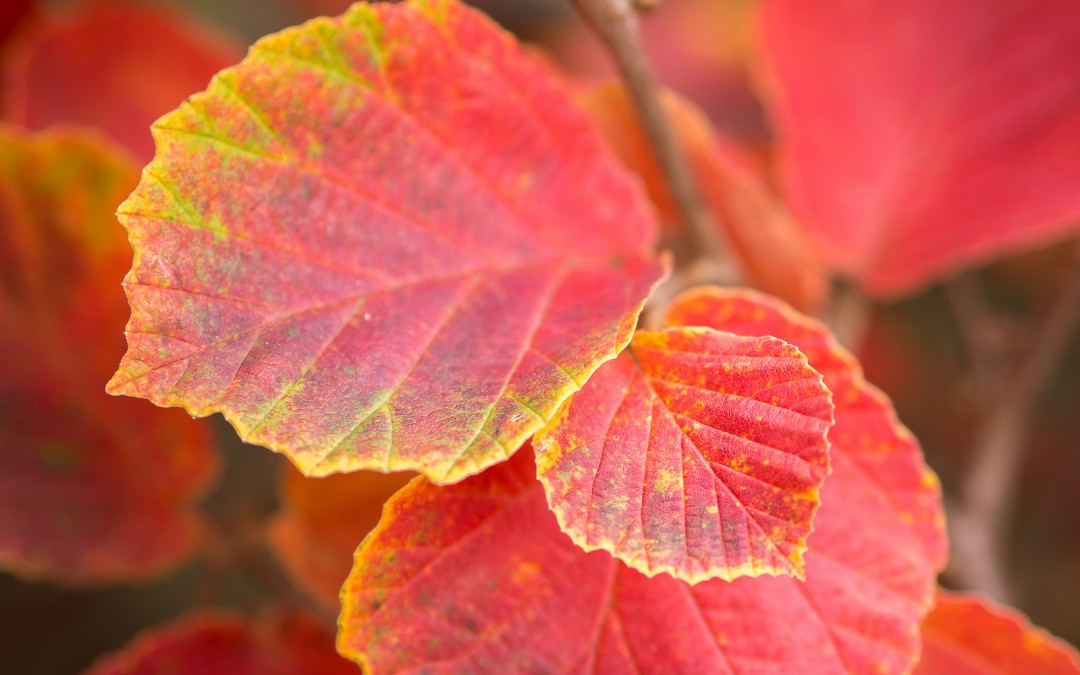 Fallen leaves: bad for your lawn, great for your garden
