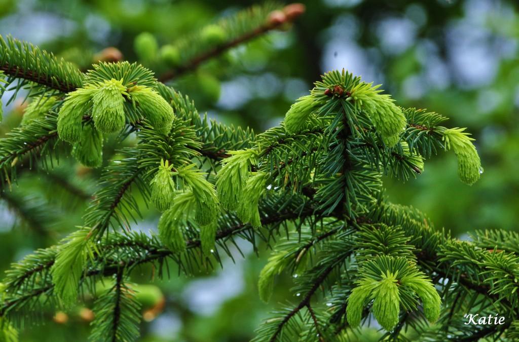 Sing a carol of praise to trees
