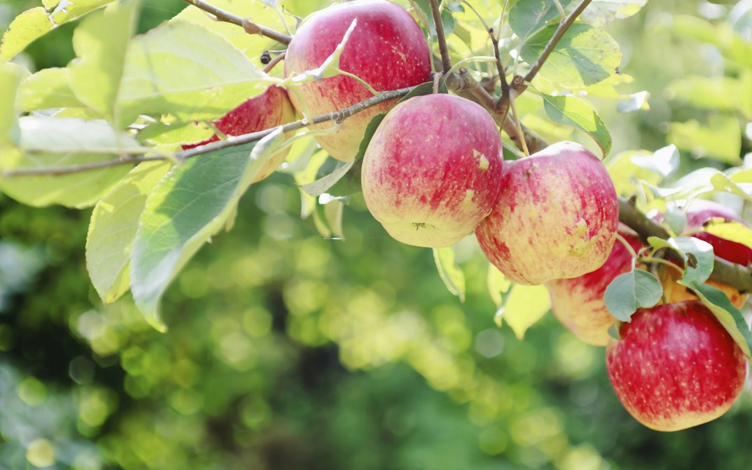 Choosing the right apple tree