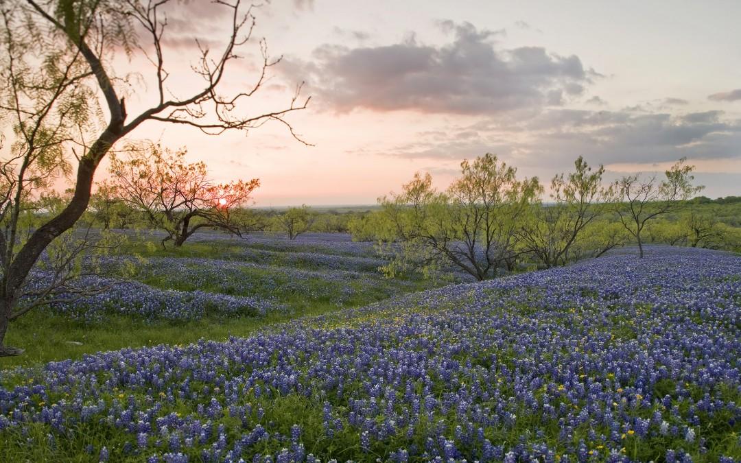 What prairies teach us about garden design