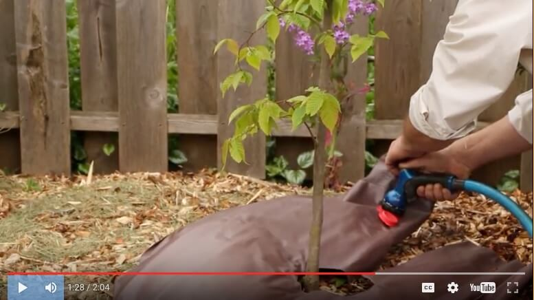 How to water a newly planted tree