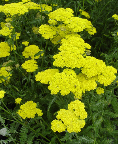 Plants that tolerate drought are winners