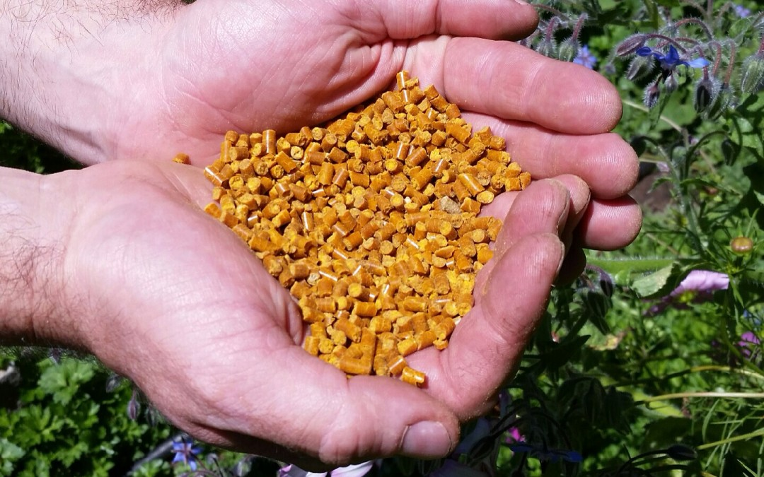 Corn gluten is great for your lawn's diet