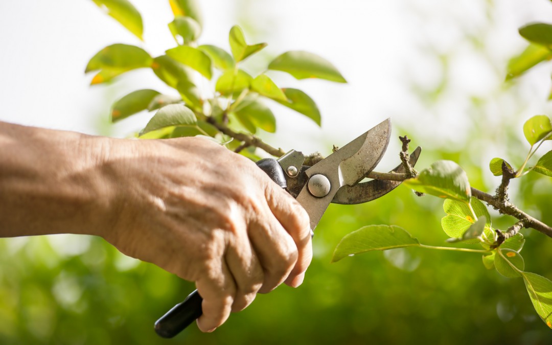 Summer is a great time for pruning