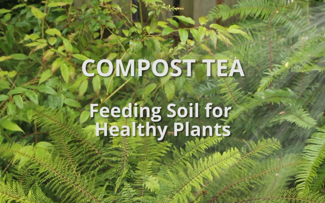 Video: Why we love compost tea