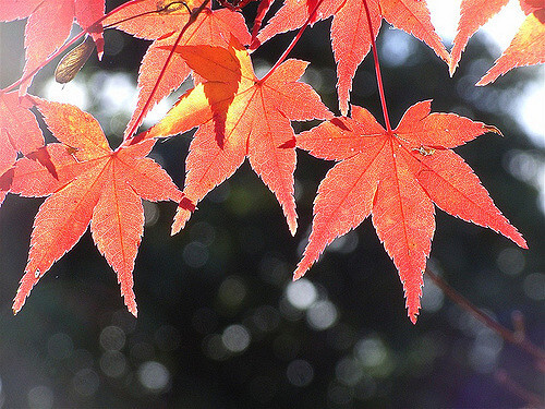 Now is the time to rake leaves–and use them
