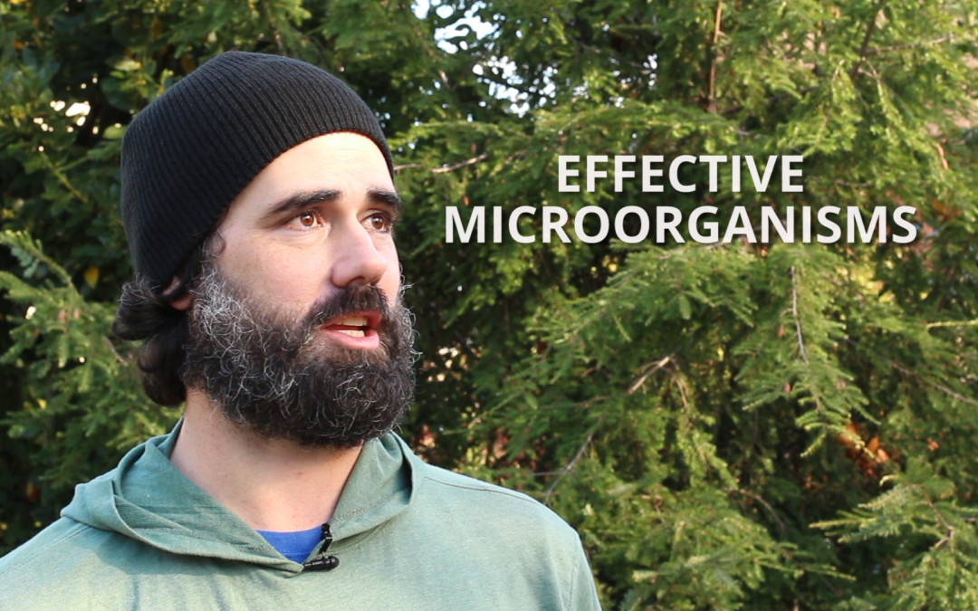 Effective microorganisms: building soil health