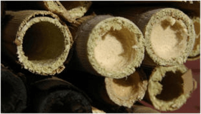Try mason bees: 10% off through Feb 14