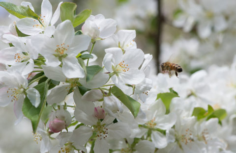 Spring tree care tips--In Harmony Sustainable Landscapes