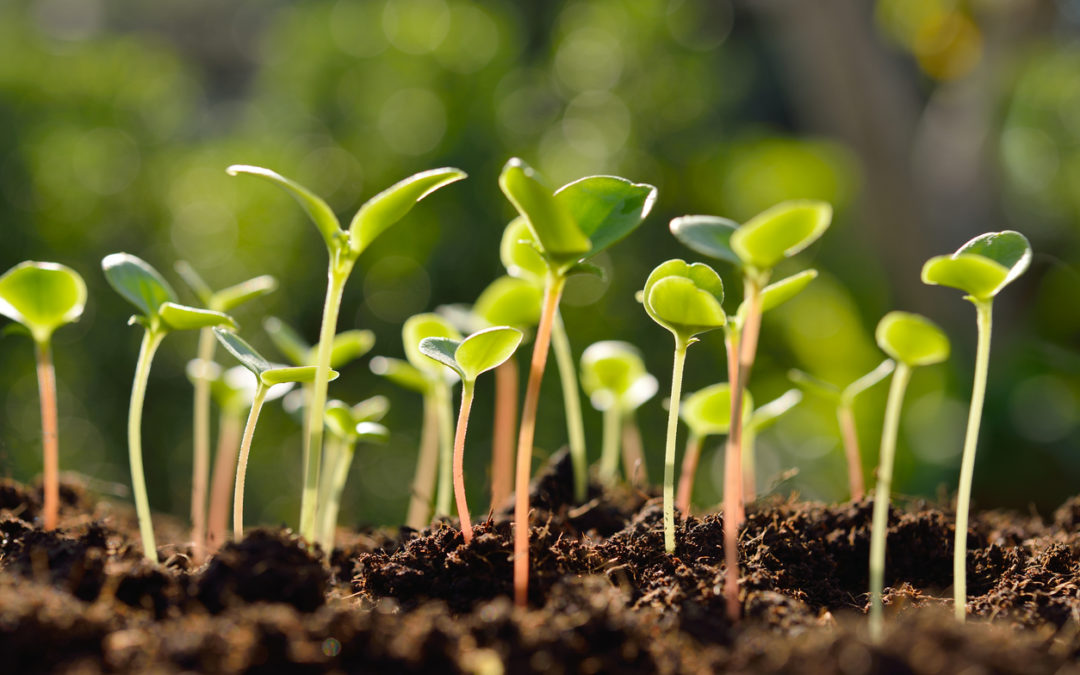 Choosing seeds and plants for best results