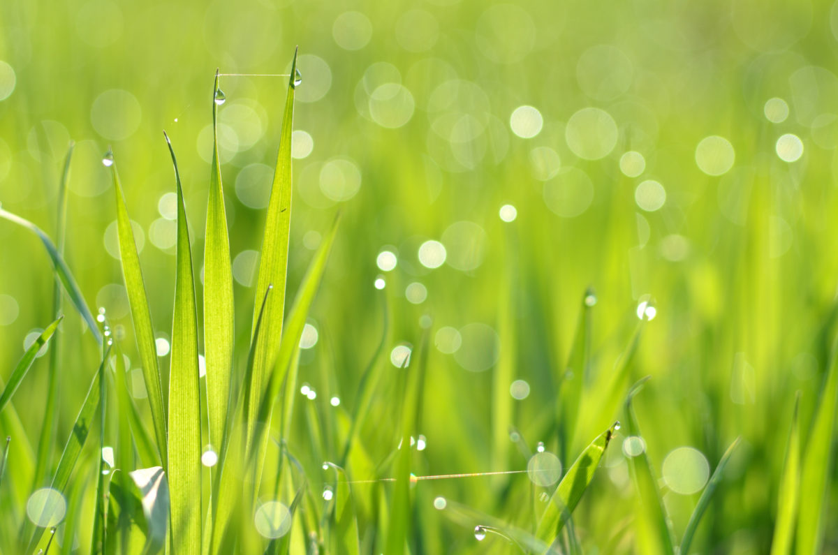 Proper mowing will help keep your lawn healthy. In Harmony Sustainable Landscapes
