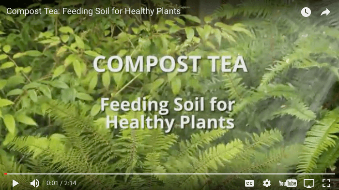 Compost tea has great garden benefits