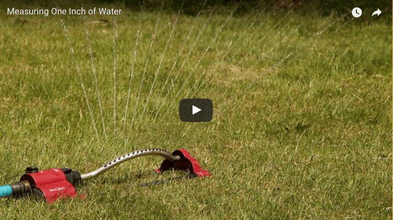 Measuring sprinkler output: one inch of water