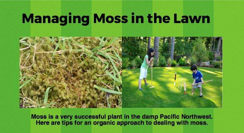 Tips for managing moss in lawns