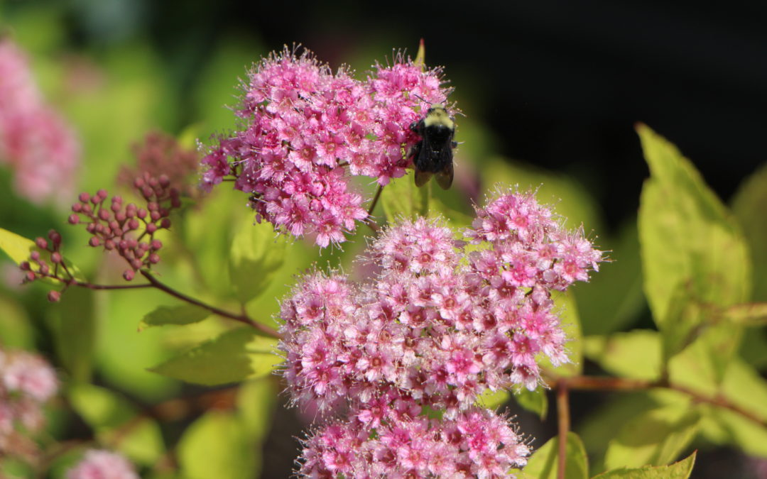 Celebrate pollinators in your garden