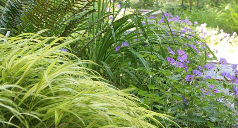 Plantings10