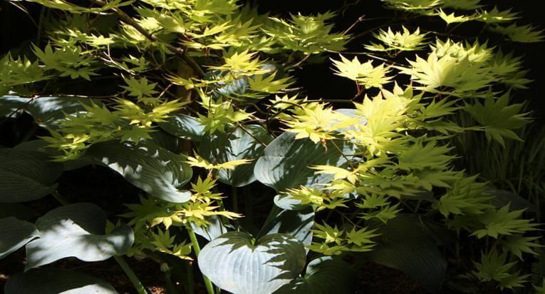 Plantings11