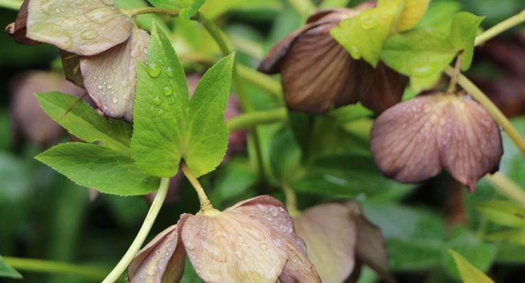Plantings18