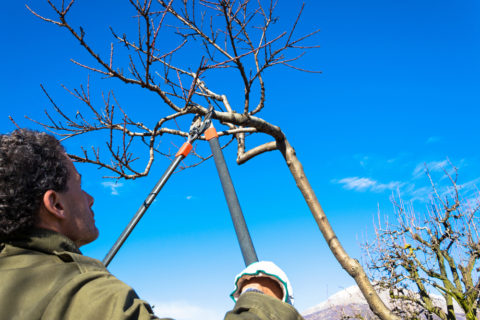Winter pruning, In Harmony Sustainable Landscapes