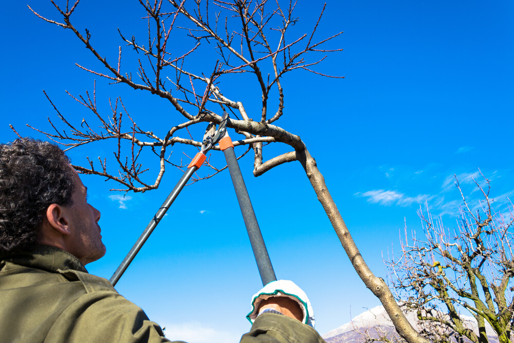It's not too late for winter pruning