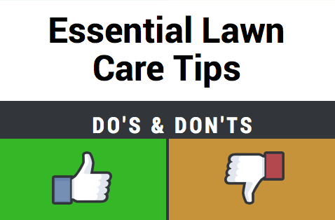 Essential lawn care tips infographic