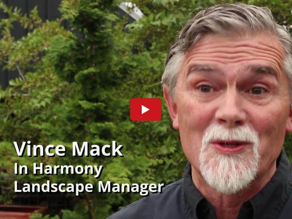 In Harmony Sustainable Landscapes, Landscape Design Process