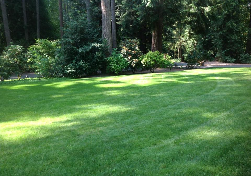 Improving your lawn's environmental impact