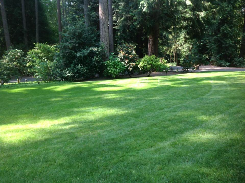 Your lawn's environmental impact can be positive or negative, depending on how you take care of it. In Harmony Sustainable Landscapes.