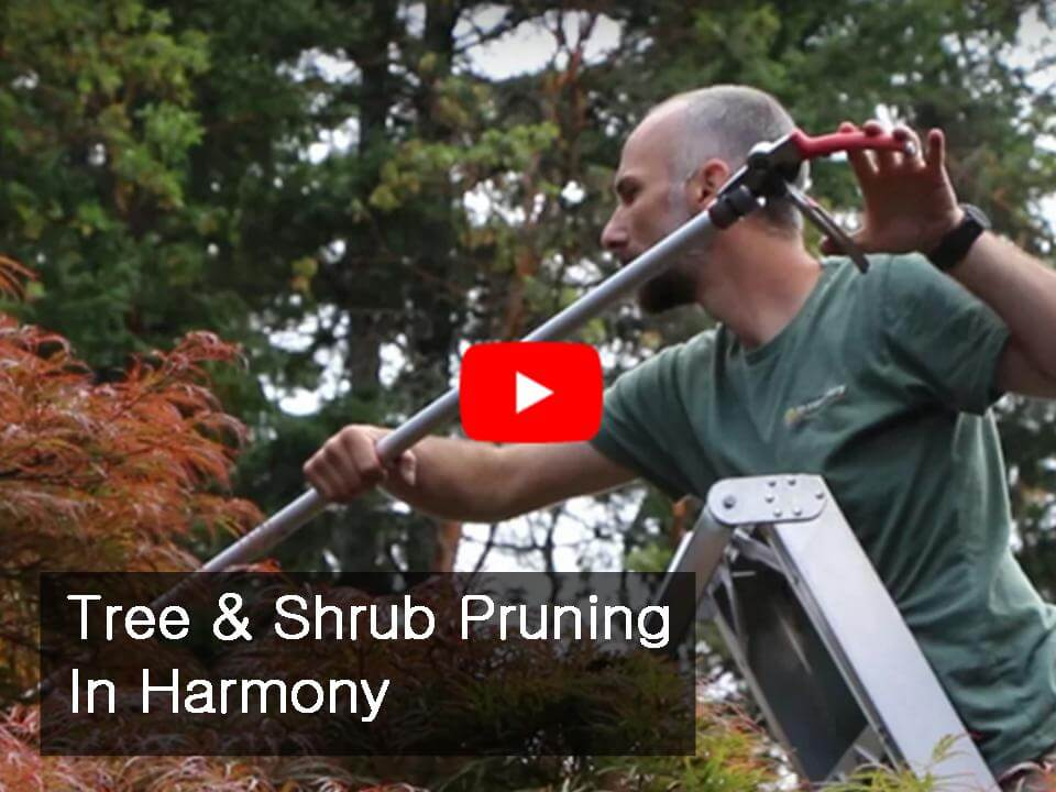 In Harmony Sustainable Landscapes, Tree and Shrub Pruning