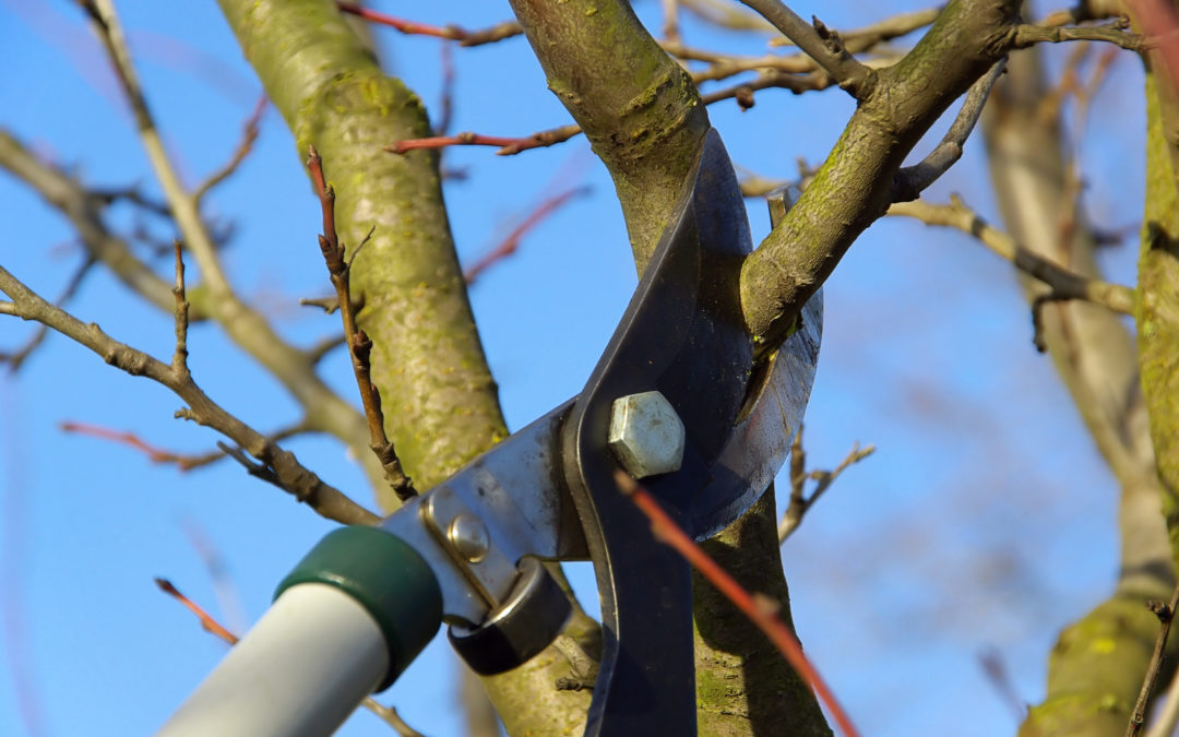 Winter pruning helps trees and shrubs stay healthy