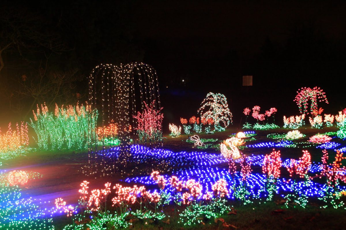 Bellevue Botanical Garden is one of many places to see gorgeous light displays in December. In Harmony Sustainable Landscapes