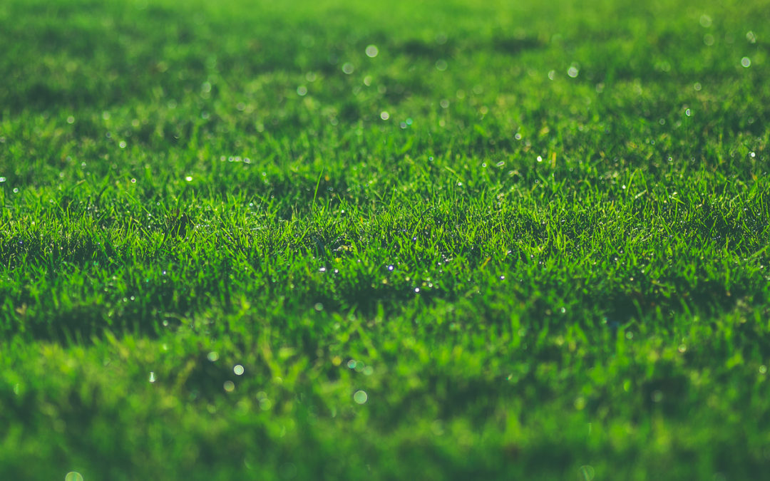 What does lime do for your lawn?