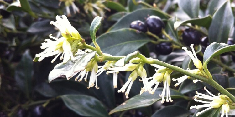 Evergreen Is Keen Plant More Evergreens In Your Landscape In