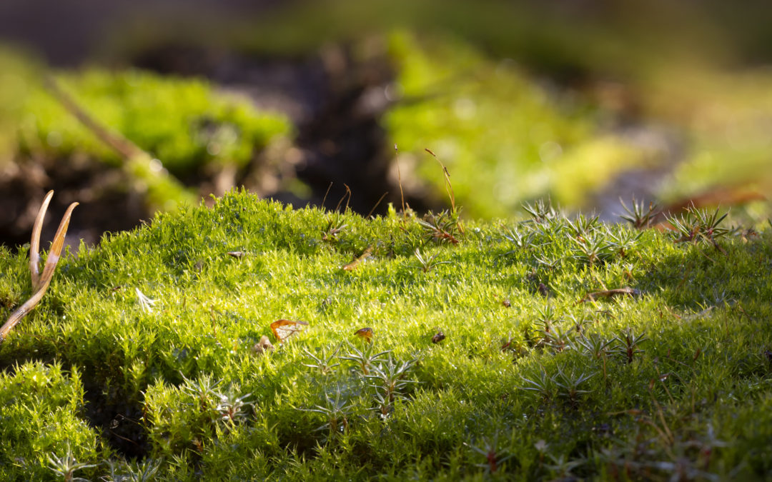 Long-term solutions to moss problems