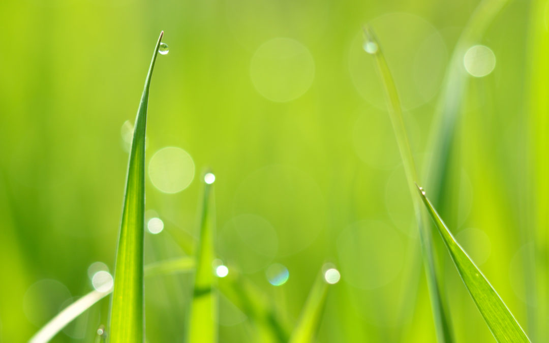 7 tips for water-wise gardening