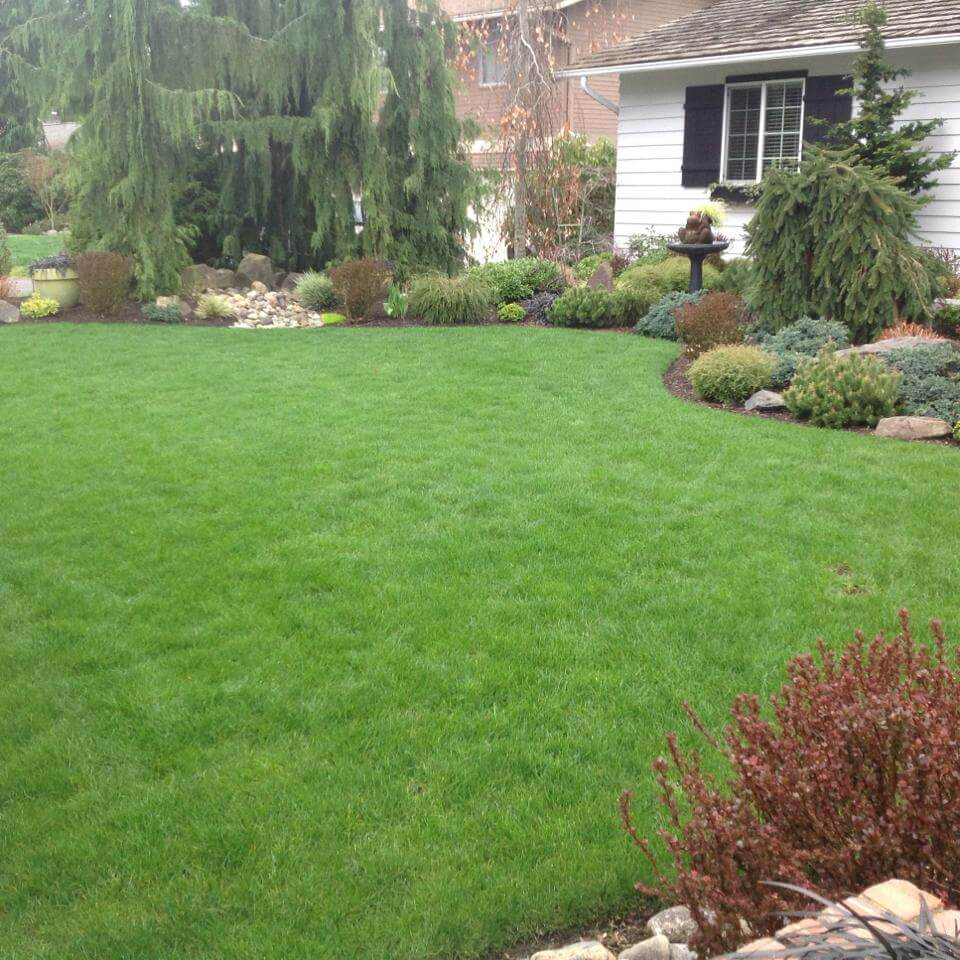 Our natural lawn, tree and shrub care services build soil health for lush, resilient landscapes. In Harmony Sustainable Landscapes